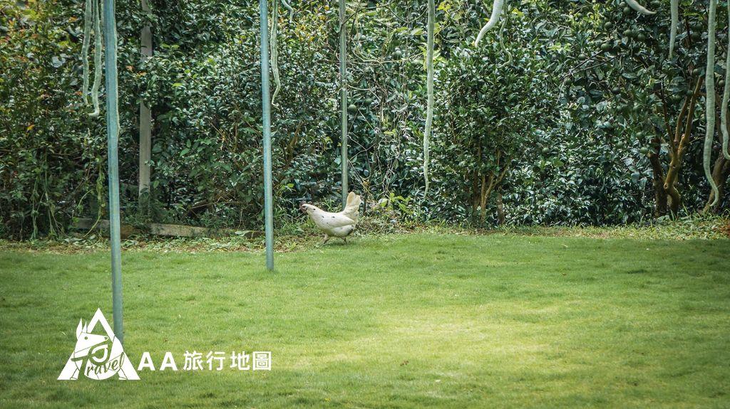 大山北月 果園裡面還可以看到很多隻放山雞在跑