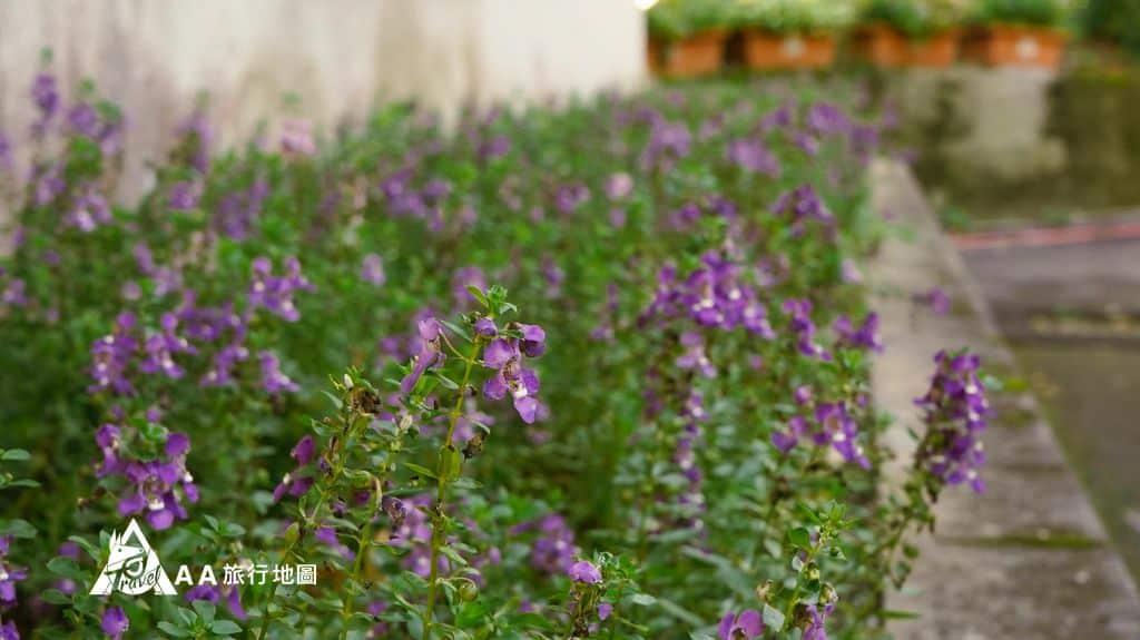蟬說和社山林在這邊到處都隨處可見美麗的小花