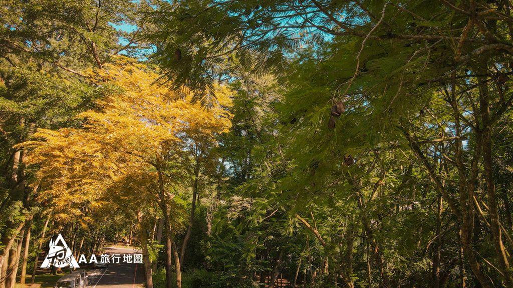蟬說和社山林這個季節來剛好有長松果