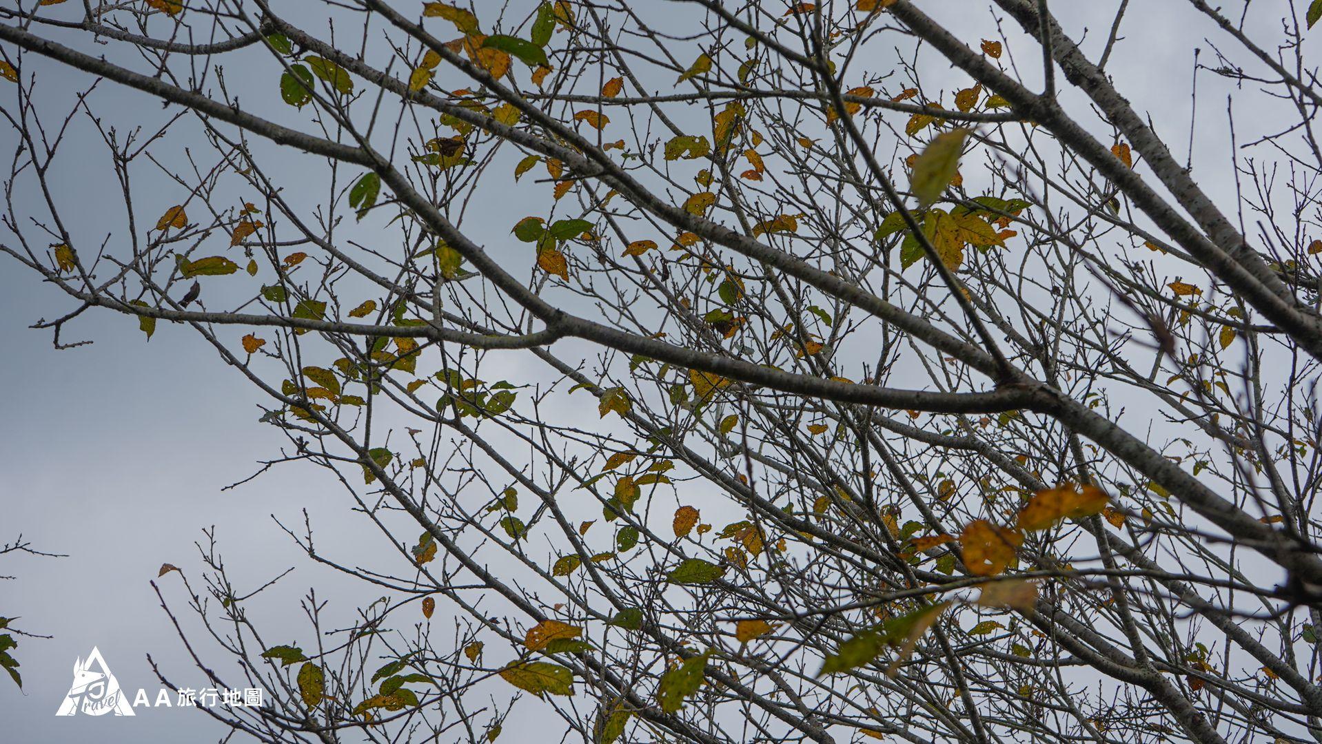 鳳凰亭序 這時候來樹葉慢慢轉黃了,拍起來有一種不一樣的味道
